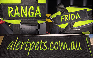 Best Dog Training St Ives Sydney