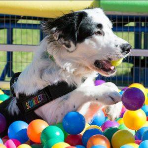 Best Dog Training Sydney