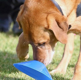 Best Dog Training St Ives