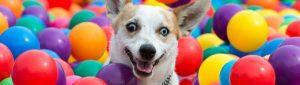 Alert pets dog training Parramatta