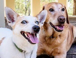 Best Dog Training Parramatta