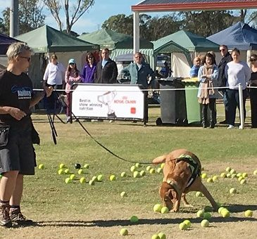 Best K9 Scentwork Training Sydney