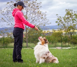 Best Dog Training Parramatta