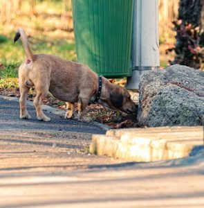 Dog Scent work Training