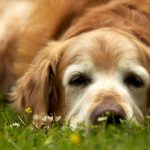 Ageing In Dogs: What To Expect And How To Take Care Of Them