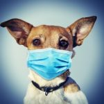 Pandemic Puppies, COVID-19  And Your Dog