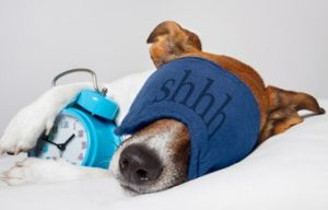 Best Dog Trainer Gold Coast Queensland