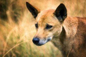 Best Dog Trainer Sydney