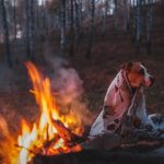 How to Help Your Senior Dog Stay Warm during Winter