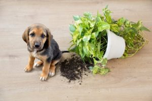 How do I puppy proof my home.
