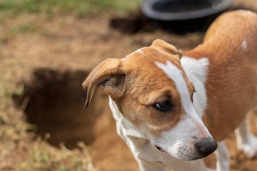 Best Dog Training GoldCoast