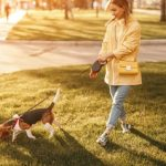 Six Mistakes That Ruin Your Dogs Walk