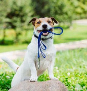 Best Dog Walking Training
