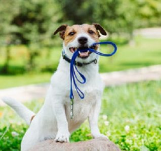 Best Dog Walking Training