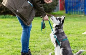 Best Dog Training Gold Coast