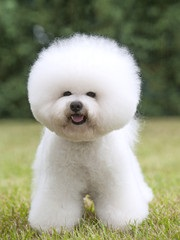Top 10 Hypo-Allergenic Dogs